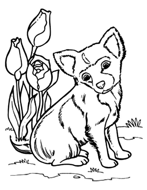 sitting dog coloring pages chihuahua dog sitting beside tulips coloring pages netart pages coloring dog sitting