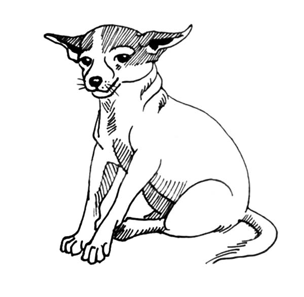 sitting dog coloring pages chihuahua dog sitting calmly coloring pages netart sitting dog coloring pages