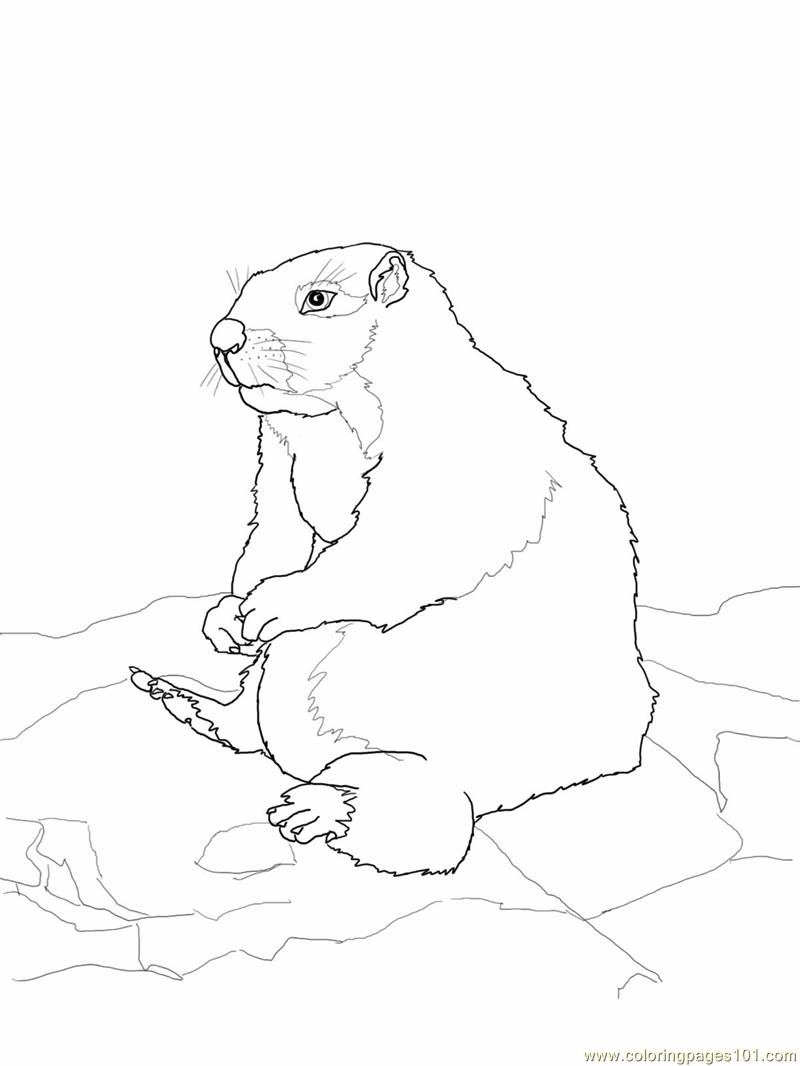 sitting dog coloring pages sitting gopher or prairie dog coloring page free gopher coloring dog pages sitting