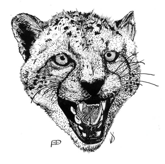 sketch of cheetah how to draw a cheetah step by step sketch cheetah of
