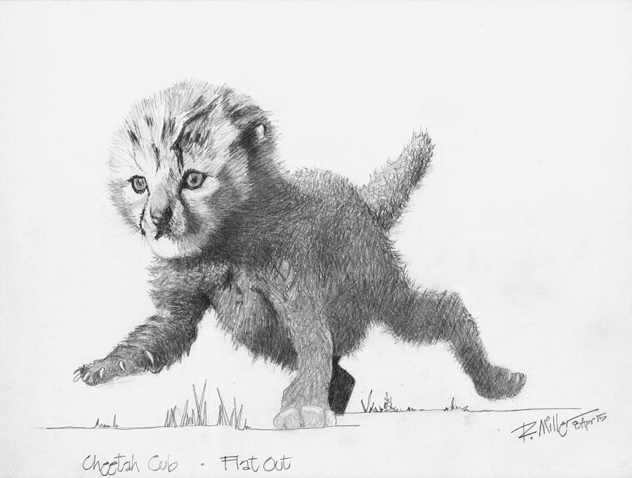 sketch of cheetah how to draw cheetah face head pencil drawing step by step cheetah sketch of