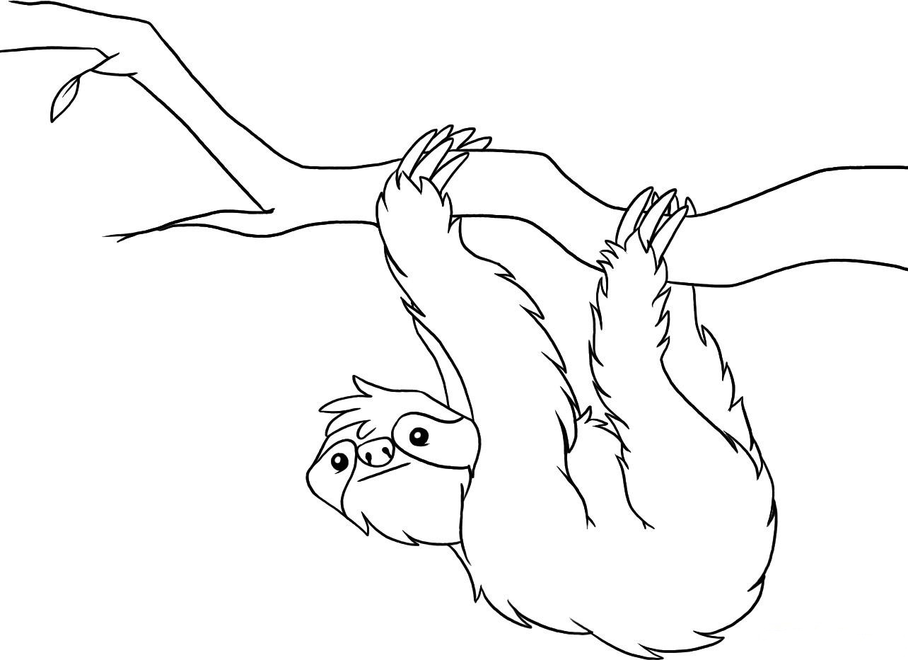 sloth coloring page sloth coloring page for kids color luna page sloth coloring