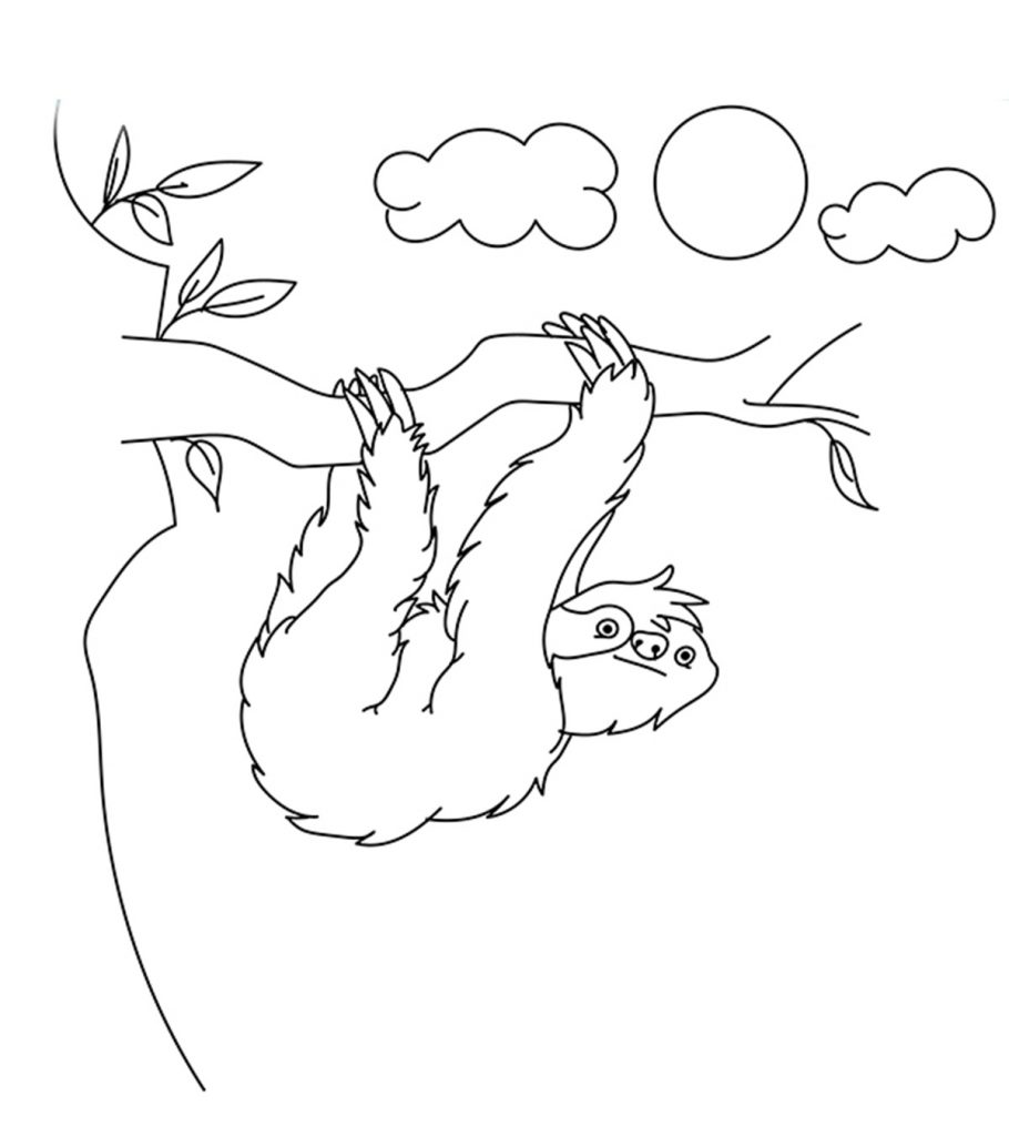sloth coloring page sloth coloring page free printable coloring pages page sloth coloring