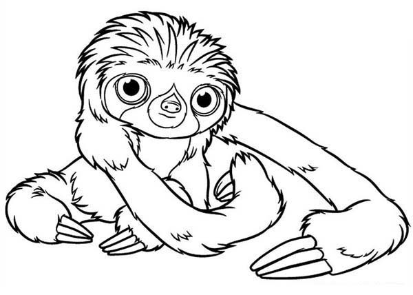 sloth coloring page sloth coloring page with images free coloring pages page coloring sloth