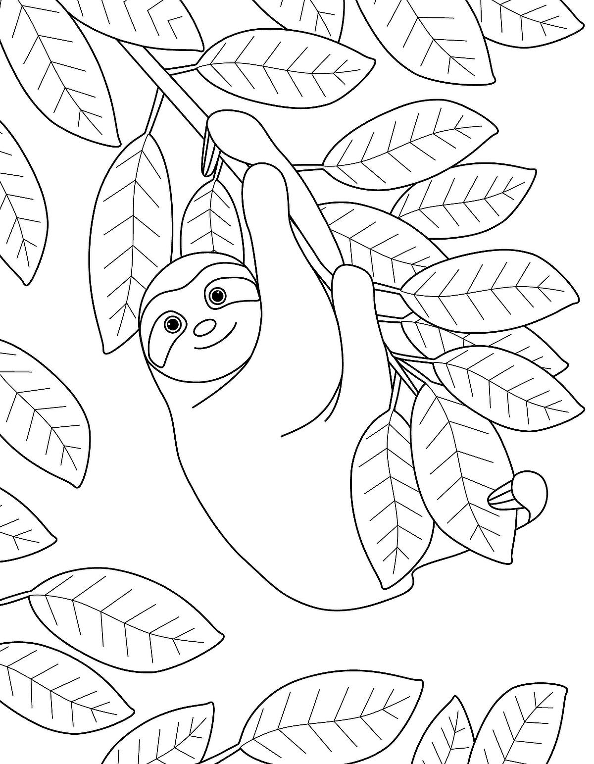 sloth coloring page three toed sloth drawing at getdrawings free download page coloring sloth