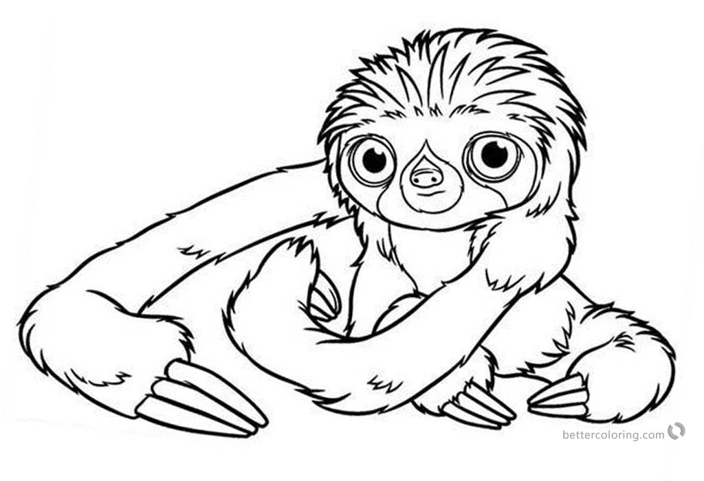 sloth pictures to print creative cuties baby sloth coloring page coloring pictures print sloth to