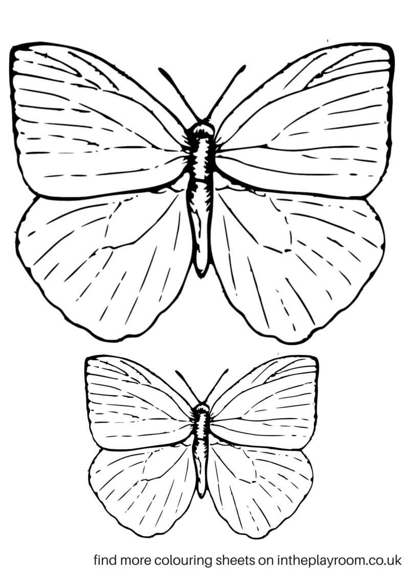 small butterfly coloring pages black and white flowers clipart butterfly drawing coloring butterfly pages small