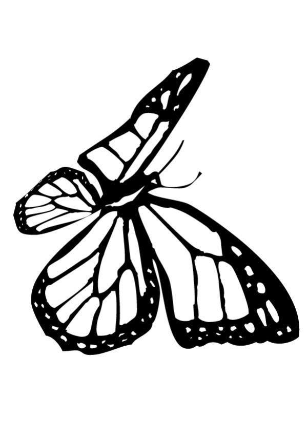 small butterfly coloring pages free printable butterfly colouring pages in the playroom pages small coloring butterfly