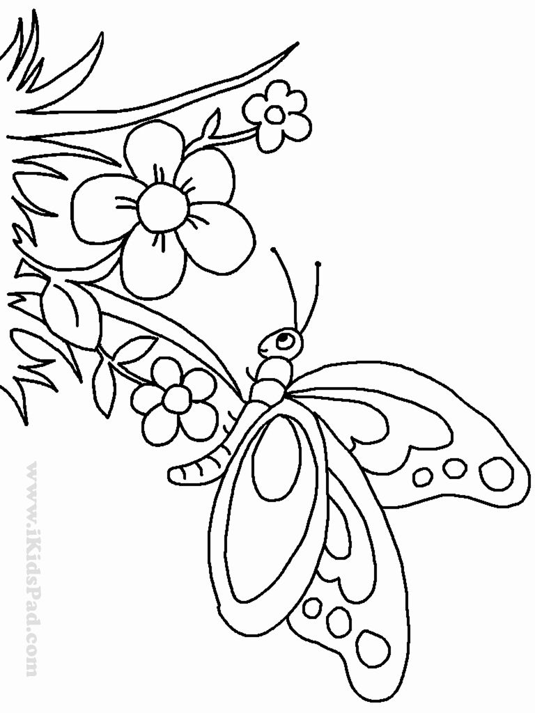 small butterfly coloring pages small butterfly coloring pages at getcoloringscom free small coloring butterfly pages