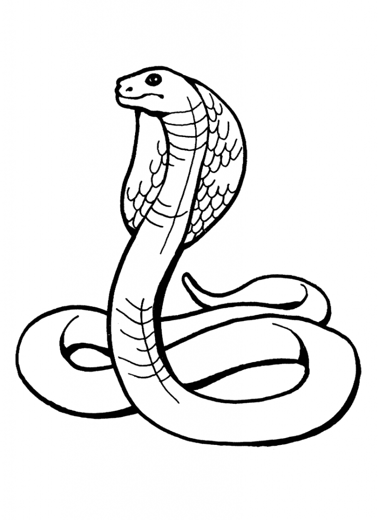 snake pictures to color and print snake coloring pages and print to snake pictures color