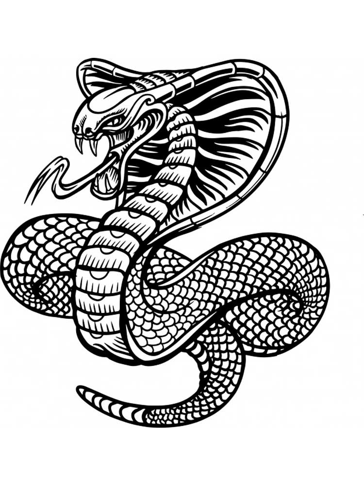 snake to colour in free printable snake coloring pages for kids in colour to snake