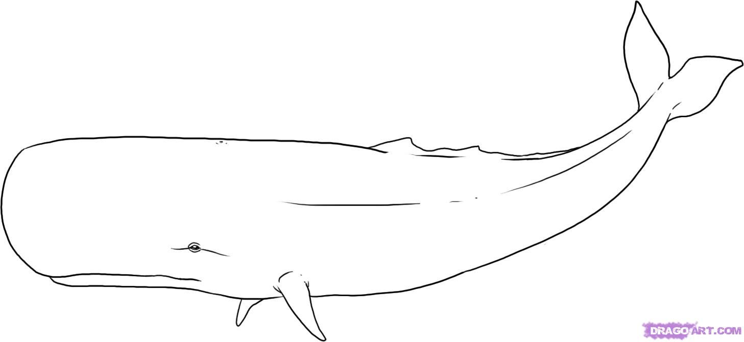 sperm whale sketch pin on whales dolphinsharks whale sketch sperm