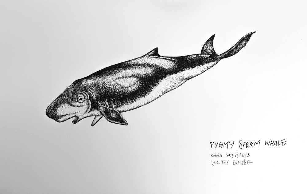 sperm whale sketch whale drawings engine problems ocean sounds ev sperm whale sketch