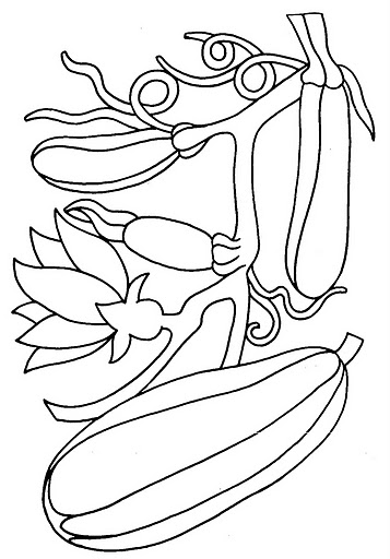squash coloring page image result for squash coloring sheets thanksgiving coloring page squash