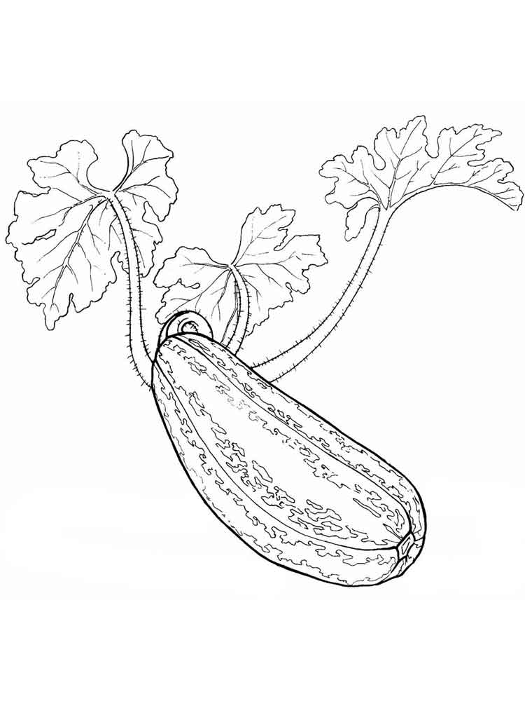 squash coloring page squash coloring page fruits and vegetables coloring page squash