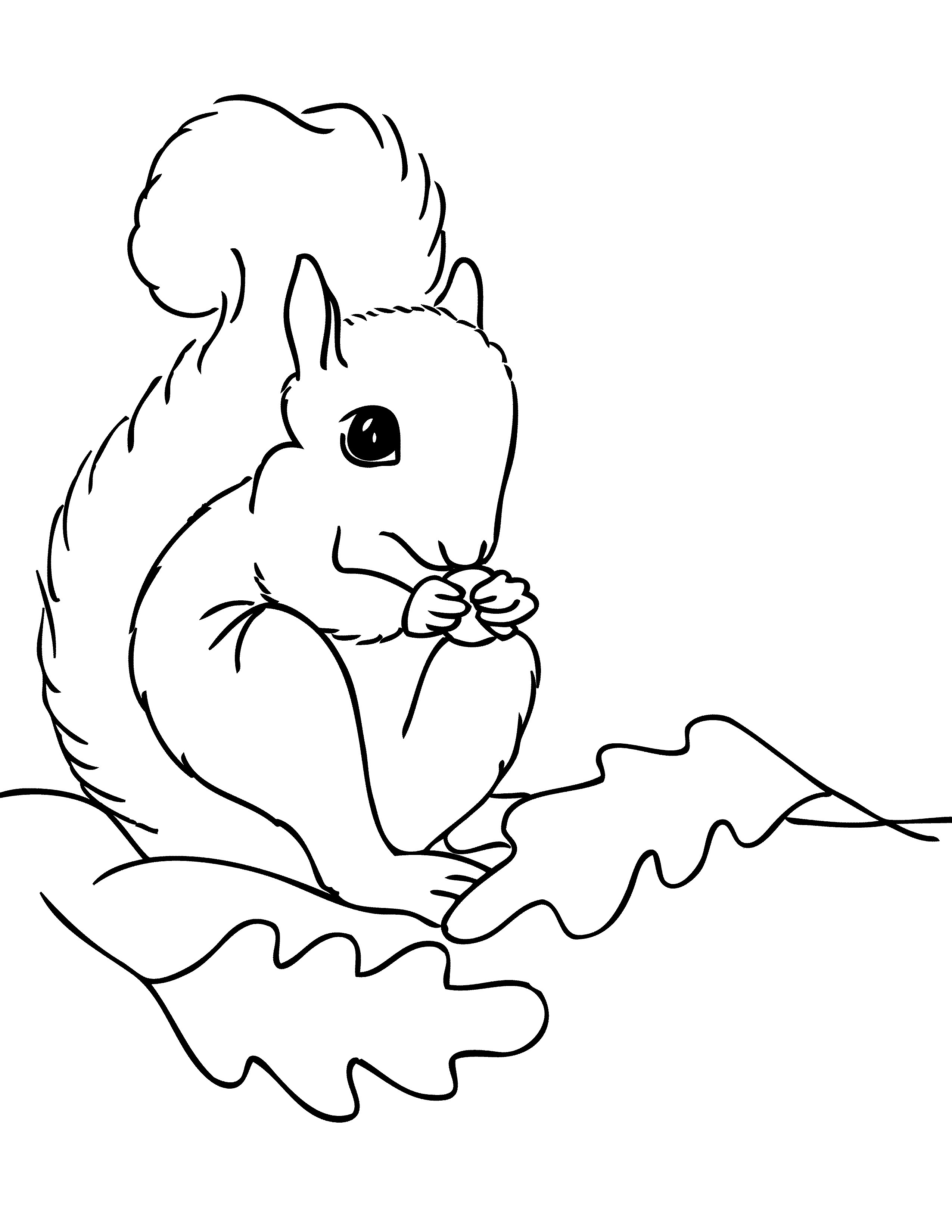 squirrel coloring pages free free printable squirrel coloring pages for kids animal place pages coloring squirrel free
