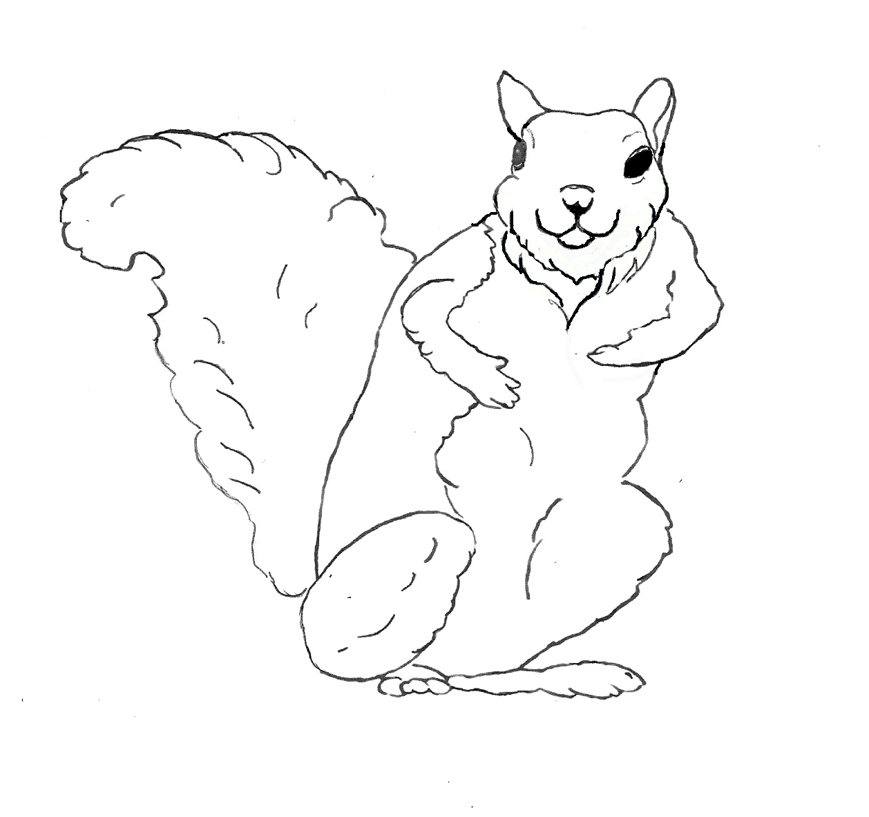 squirrel coloring pages free free printable squirrel coloring pages for kids coloring free pages squirrel
