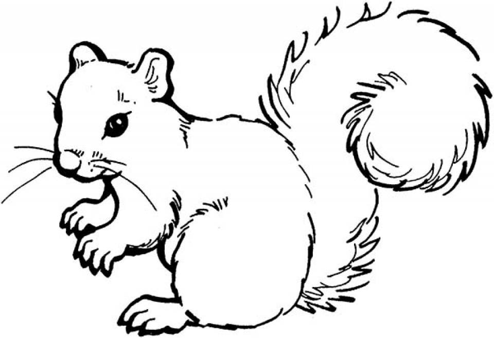 squirrel coloring pages free free printable squirrel coloring pages for kids coloring free squirrel pages