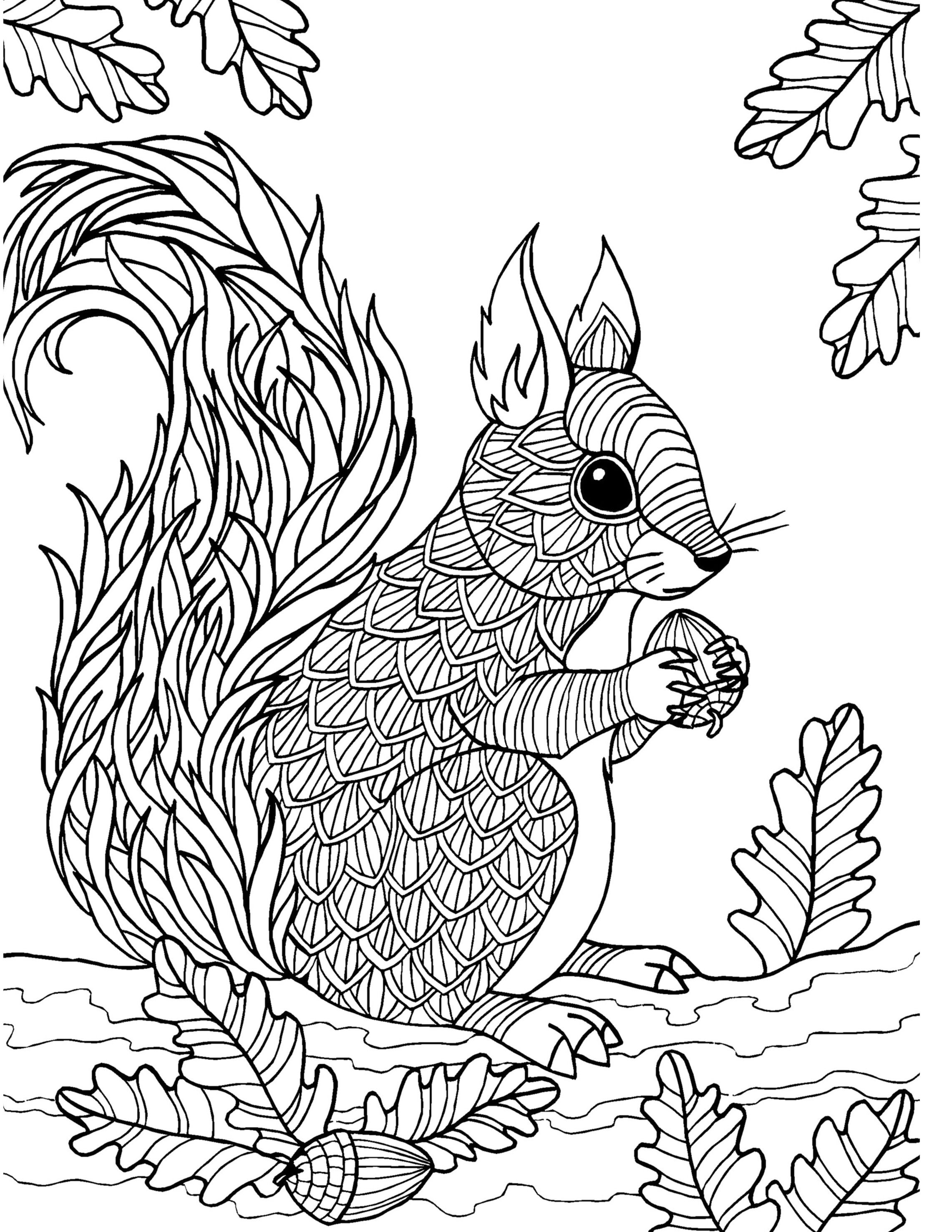 squirrel coloring pages free free printable squirrel coloring pages for kids free coloring squirrel pages