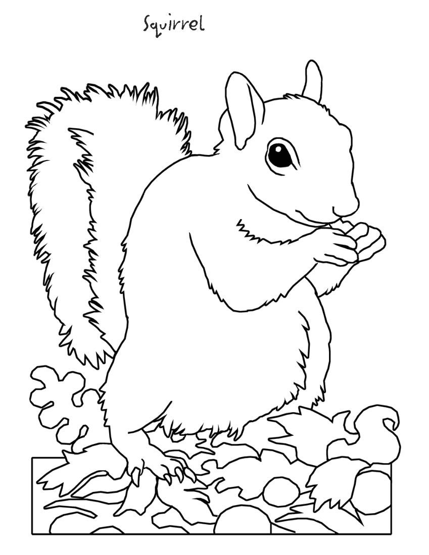 squirrel coloring pages free free squirrel coloring pages coloring pages free squirrel