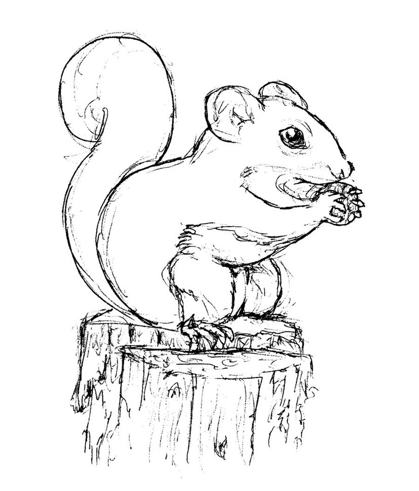 squirrel coloring pages free get this preschool printables of squirrel coloring pages free squirrel coloring pages