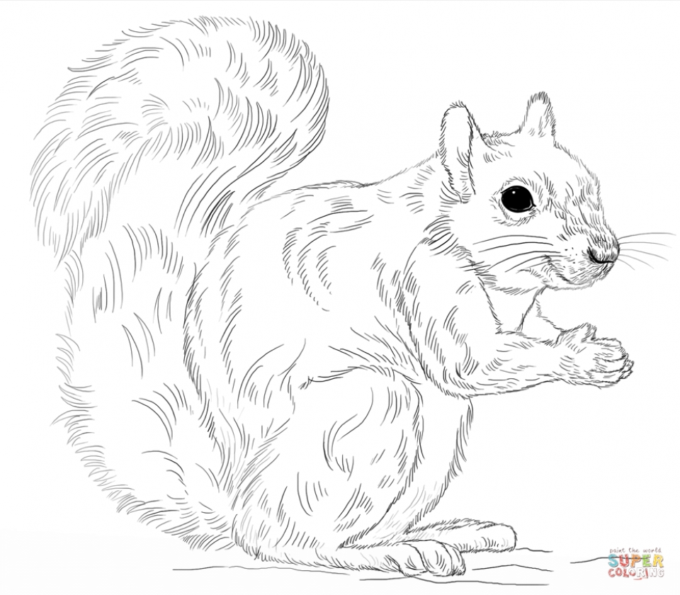 squirrel coloring pages free squirrel coloring page educationcoloringpagesanimals squirrel free coloring pages