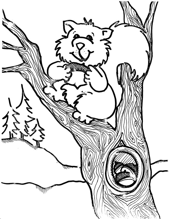 squirrel coloring pages free squirrel coloring pages free coloring pages squirrel free