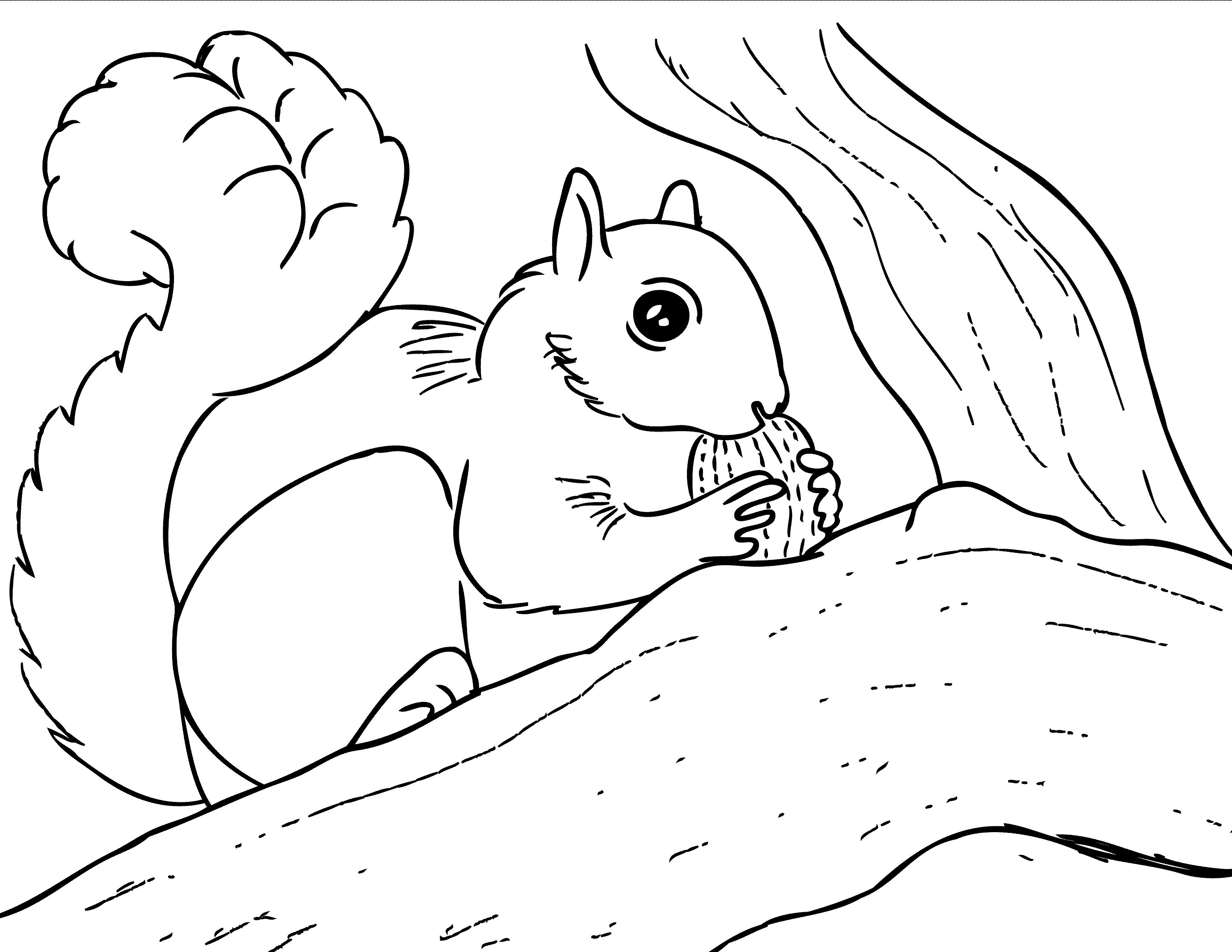 squirrel coloring pages free top 20 printable squirrel coloring pages online coloring coloring pages squirrel free