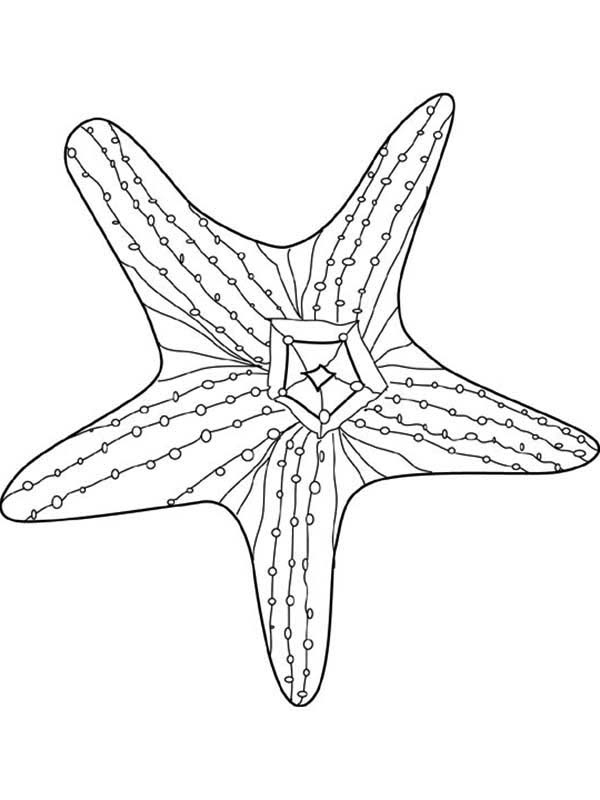 starfish to color beautiful starfish undersea creature coloring page color to starfish