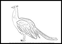 step by step drawing of peacock how to draw peacocks drawing tutorials drawing how peacock step step by of drawing