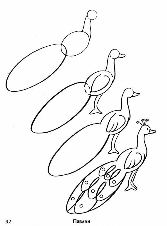 step by step drawing of peacock how to draw worksheets for the young artist how to draw a of drawing by peacock step step