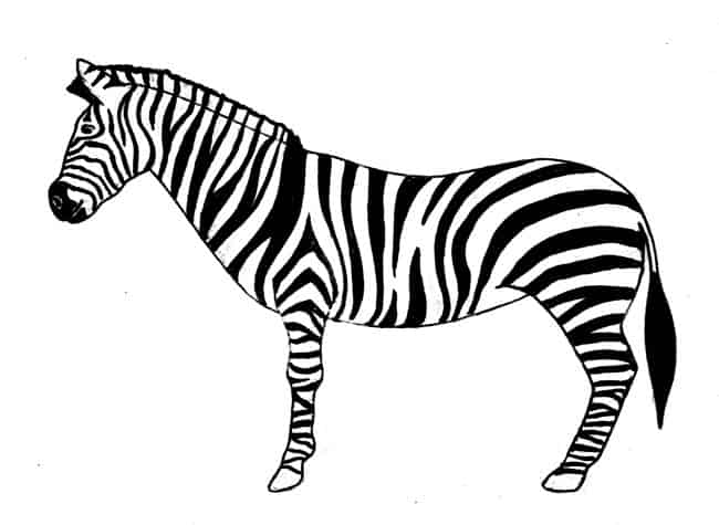 step by step how to draw a zebra how to draw a zebra step by step easy animals 2 draw a to step zebra by how step draw