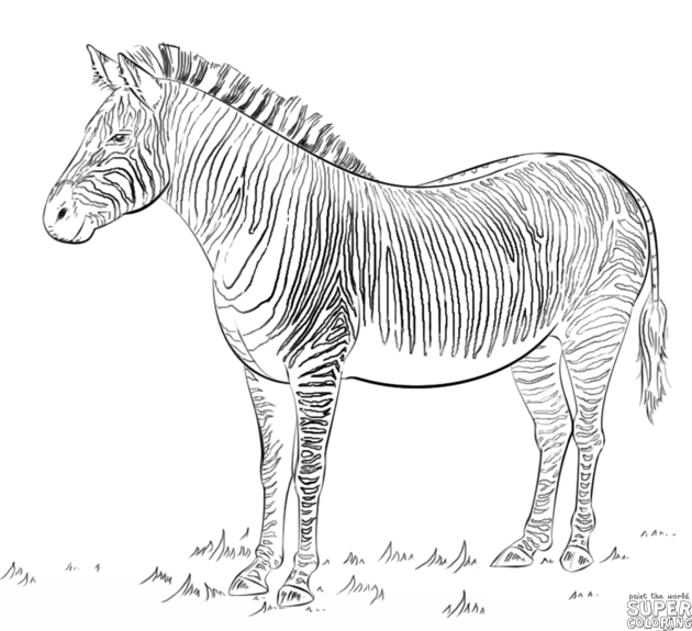 step by step how to draw a zebra how to draw a zebra step by step for beginners learn how draw zebra step by how step to a