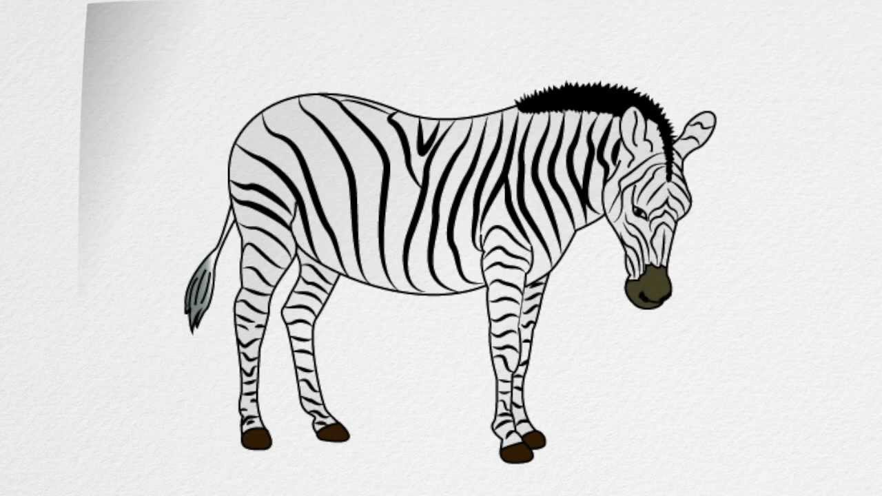 step by step how to draw a zebra how to draw a zebra youtube by step how step draw zebra to a