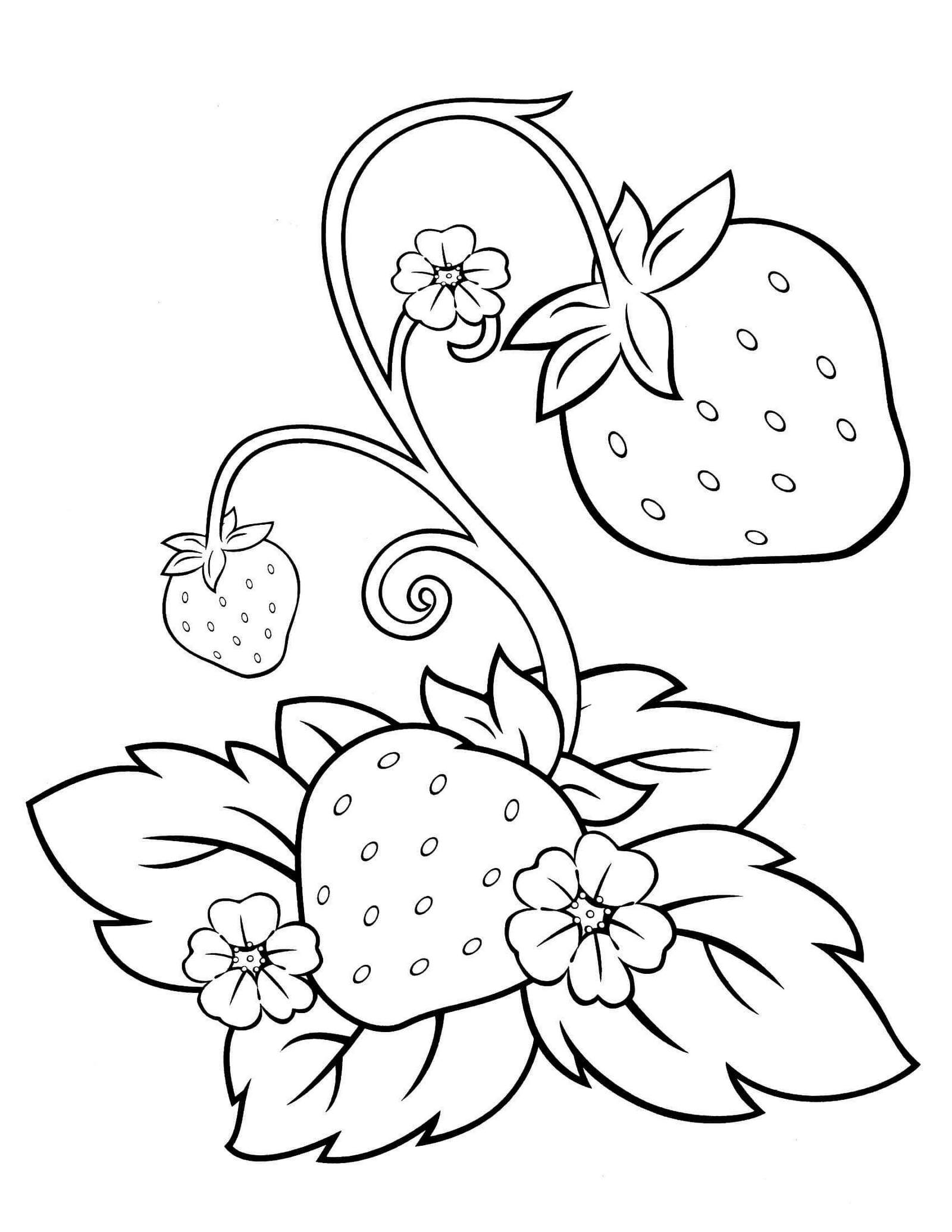 strawberry coloring image strawberry coloring pages downloadable and printable images image coloring strawberry
