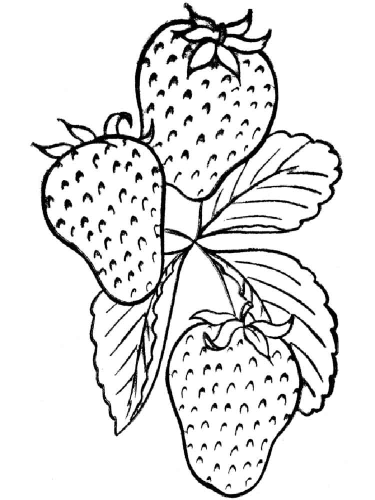 strawberry coloring image strawberry coloring pages downloadable and printable images strawberry coloring image