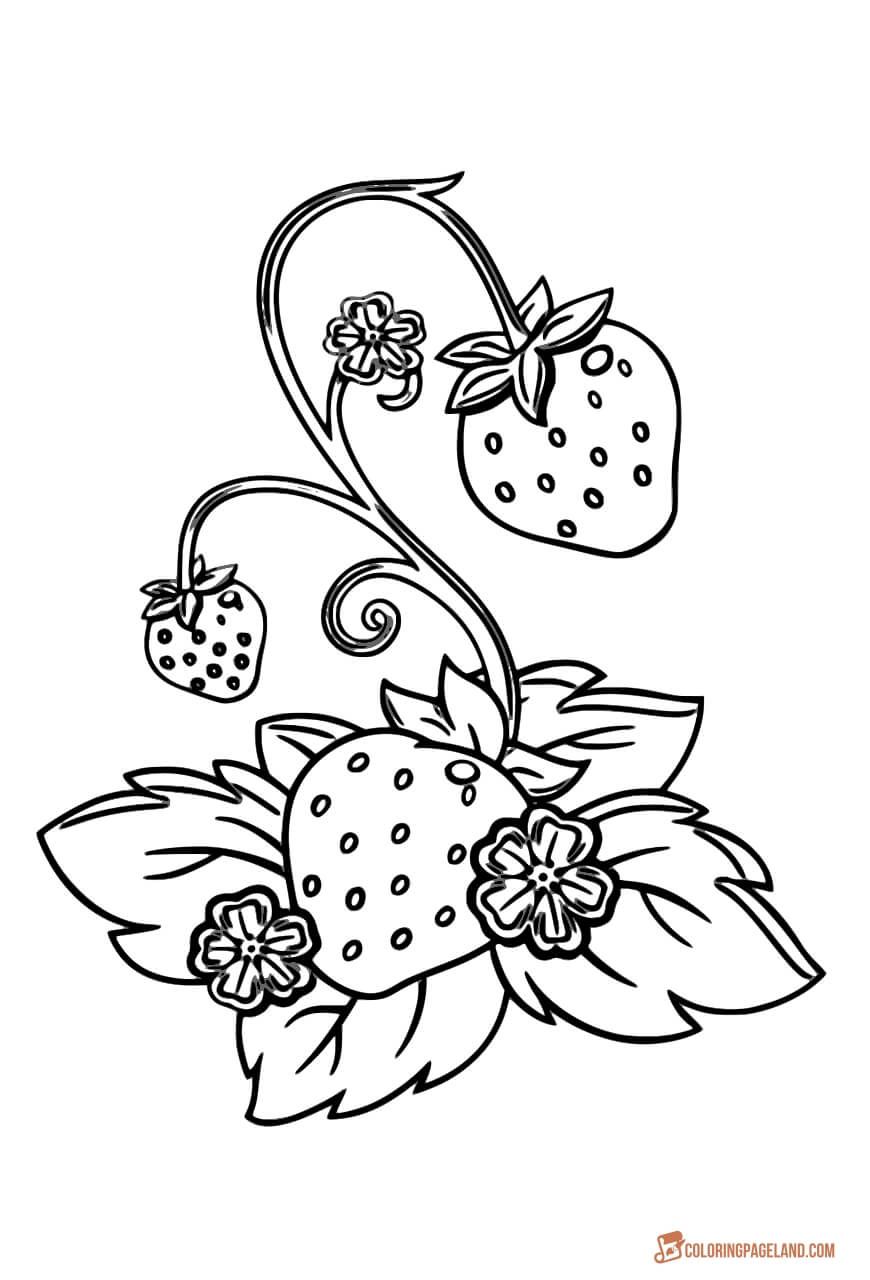 strawberry coloring image strawberry front coloring page image coloring strawberry
