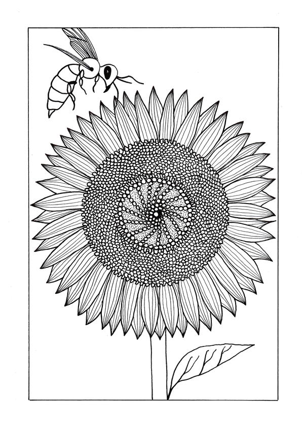 sunflower coloring close up sunflower coloring page close up sunflower sunflower coloring