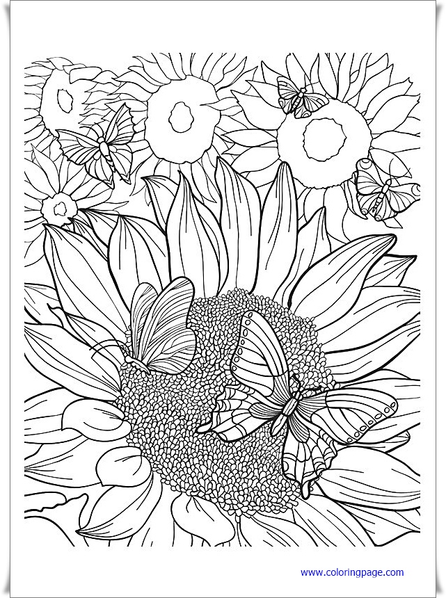 sunflower coloring coloring book pdf download coloring sunflower