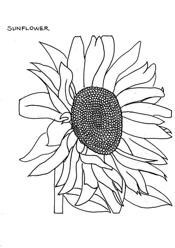 sunflower coloring fading sunflower coloring page download print online coloring sunflower