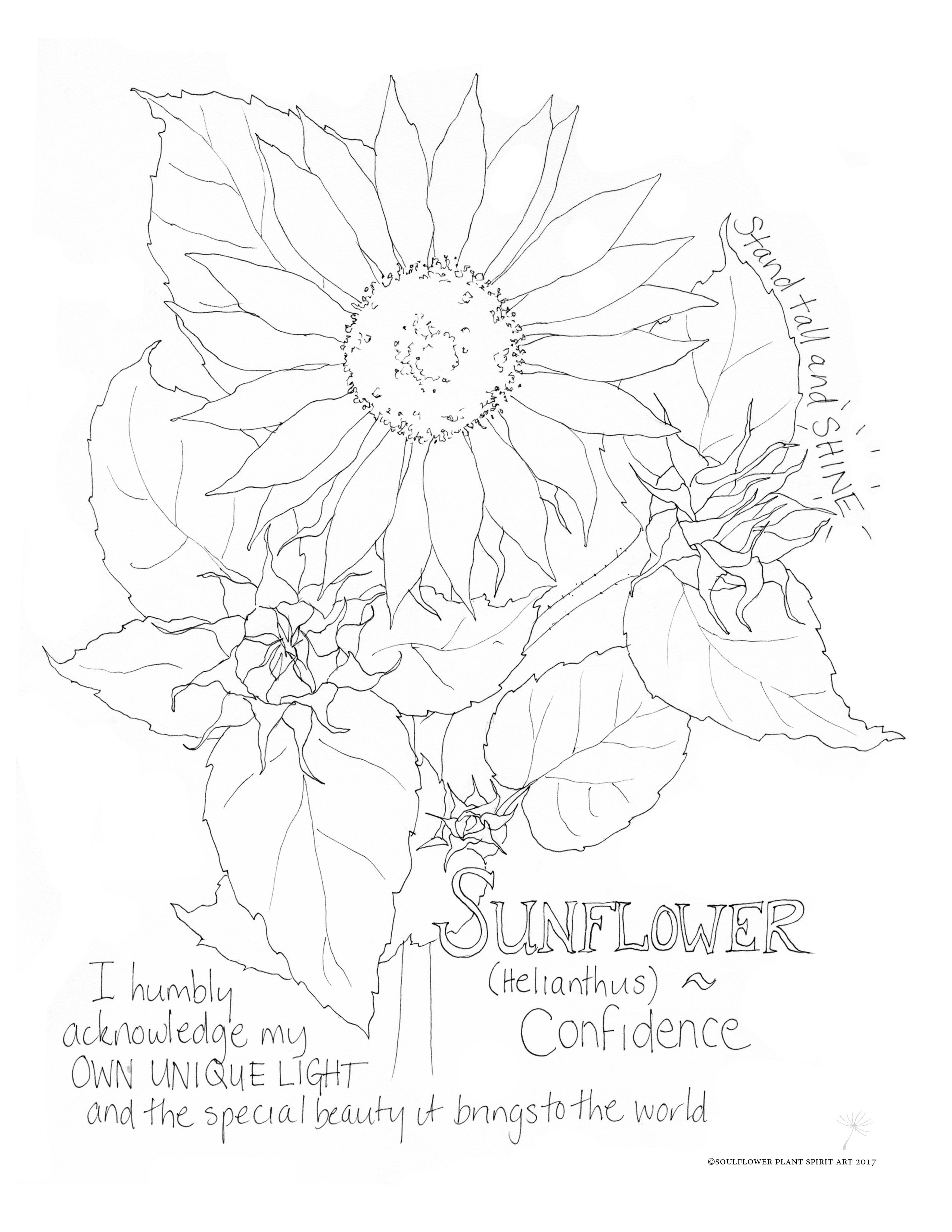 sunflower coloring free printable sunflower coloring page mama likes this coloring sunflower