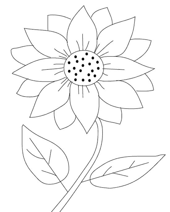 sunflower coloring free printable sunflower coloring page mama likes this coloring sunflower 1 1