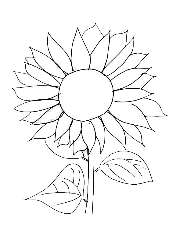 sunflower coloring free printable sunflower coloring pages for kids sunflower coloring