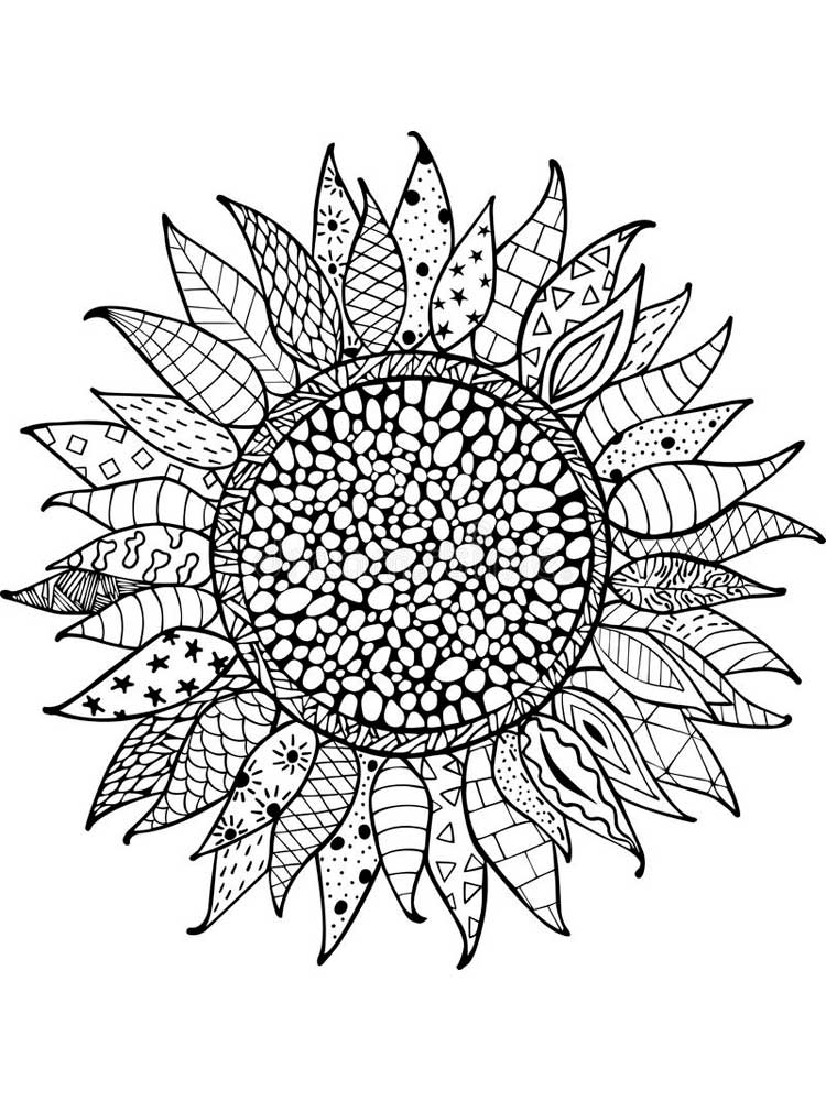 sunflower coloring page helianthus or sunflower colouring pages picolour coloring sunflower page