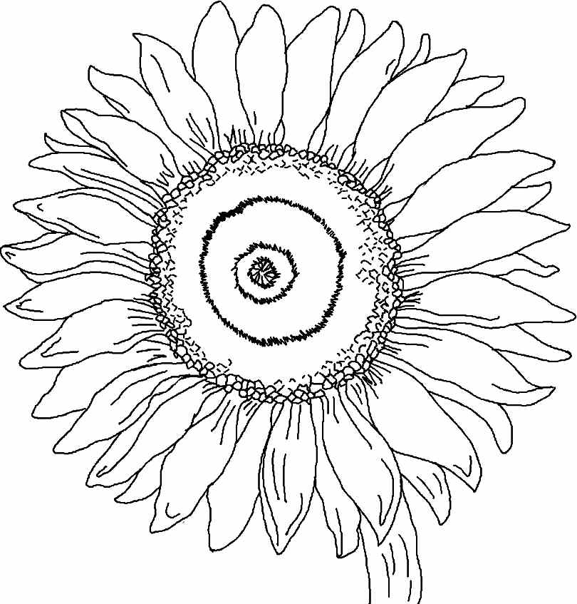 sunflower coloring page sunflower coloring pages for preschoolers coloringrocks page coloring sunflower
