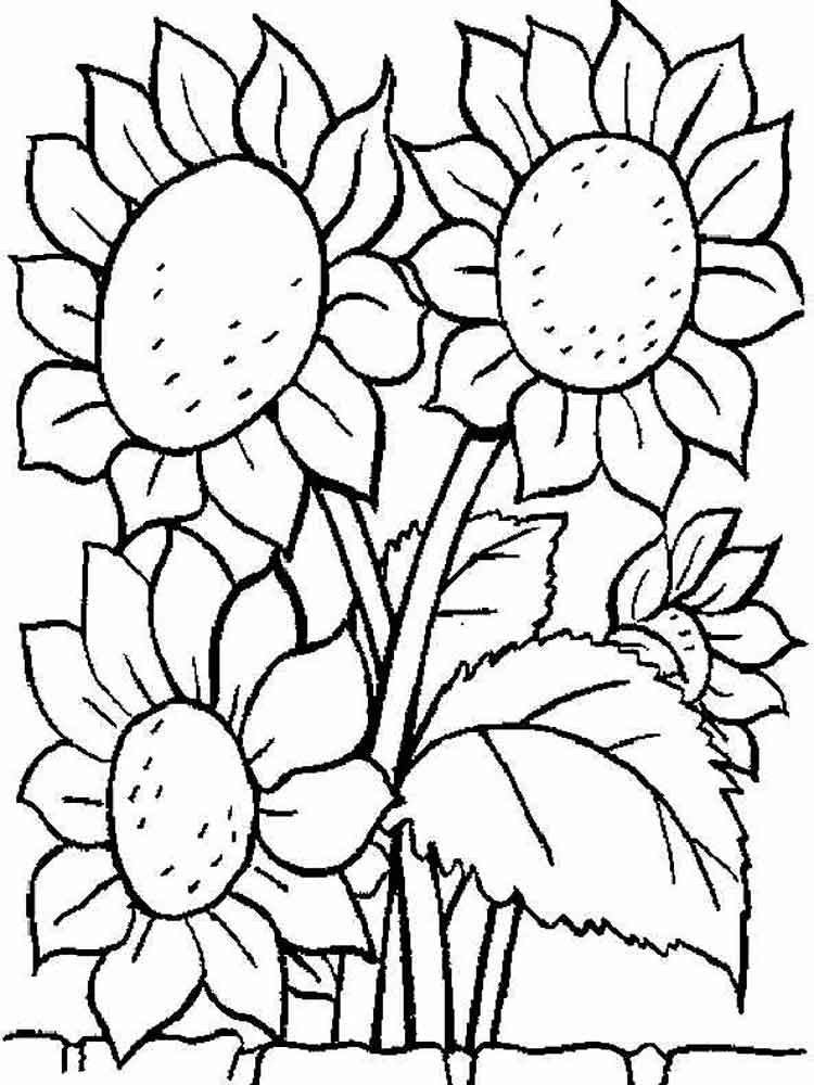 sunflower coloring pages to print simple sunflower drawing at getdrawings free download coloring pages print sunflower to