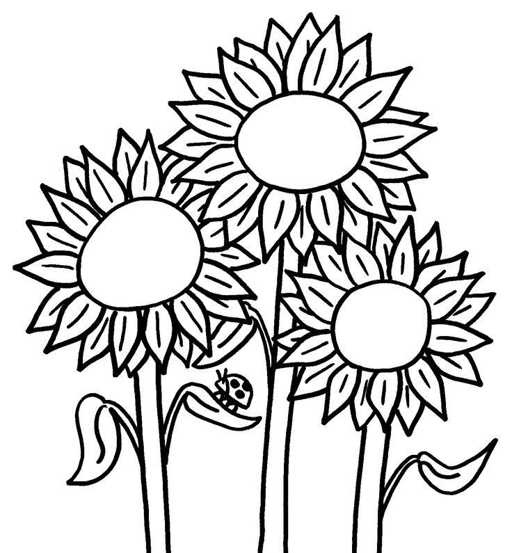 sunflower coloring pages to print sunflower coloring pages to download and print for free coloring to print pages sunflower