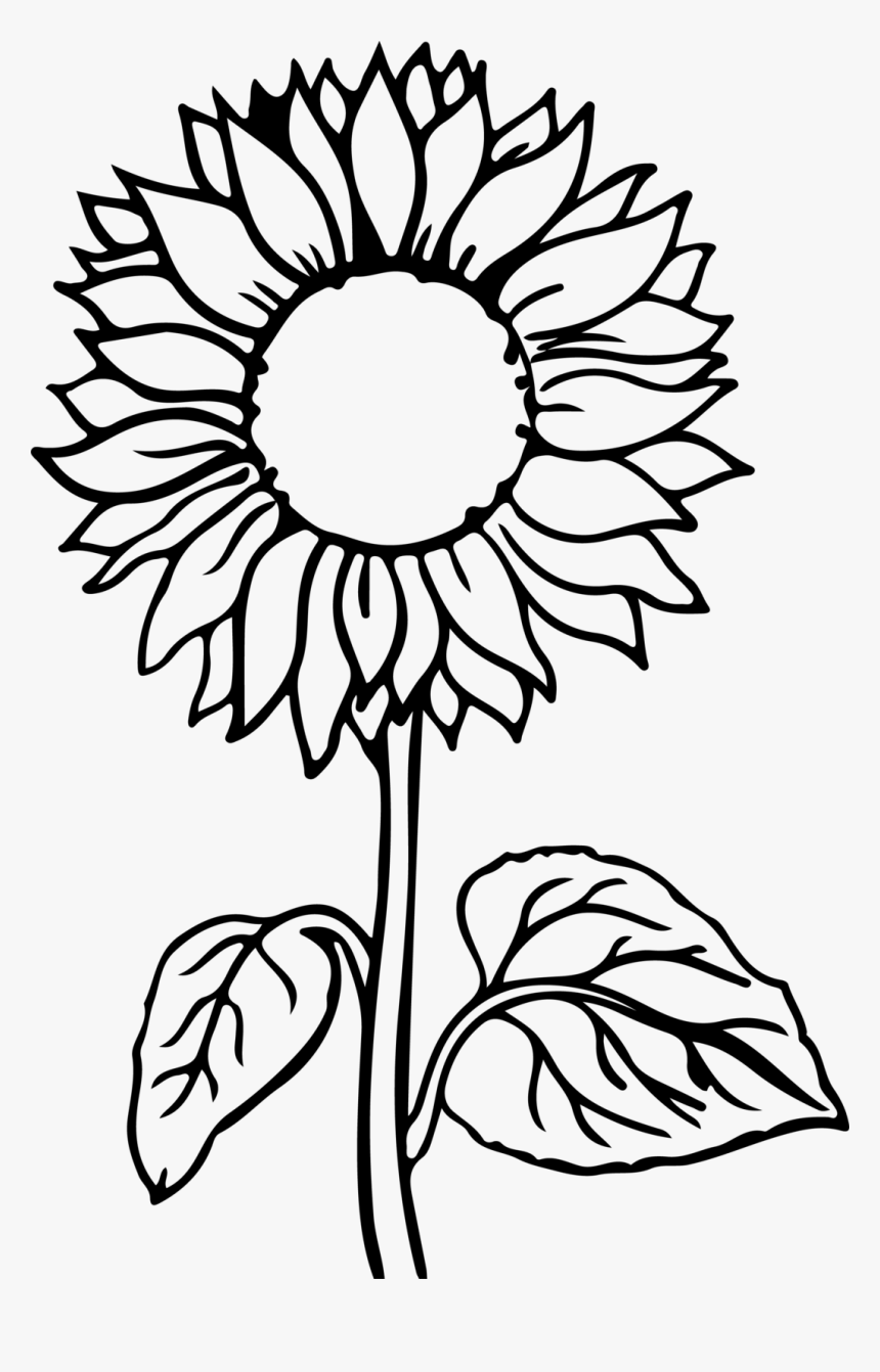 sunflower coloring pages to print sunflower drawing color at getdrawings free download sunflower coloring to print pages