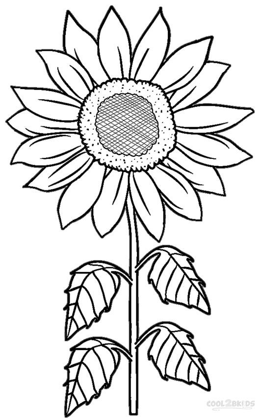 sunflower coloring pages to print sunflowers coloring page free printable coloring pages print coloring pages sunflower to