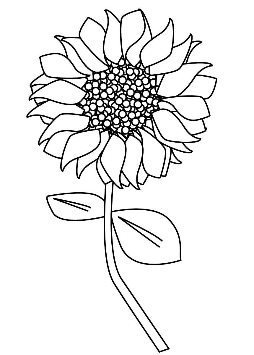 sunflower coloring pages to print top 20 printable sunflowers coloring pages online sunflower print pages coloring to